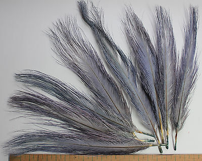 """""""Vulture"""" rhea feathers fly tying spey vintage millinery hat NOS blue grey gray"""