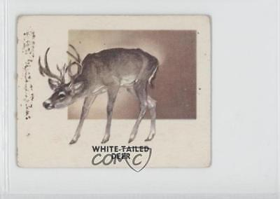 1951 Topps Animals of the World R714-1 130 White-Tailed Deer Non-Sports Card 0s4