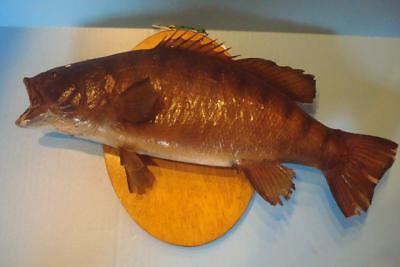 Older Taxidermy Big Mouth Bass Fish
