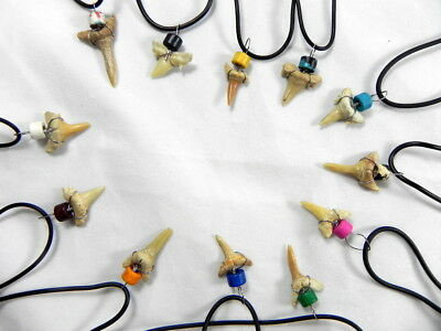Adjustable Shark Tooth Necklace Party Pack of 12 Fossil Teeth Black Band Jewelry