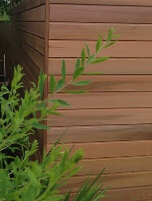 Cedar Cladding  - Sample of Western Red Cedar Timber Cladding