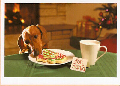 Dachshund and Cookies Naughty Santa Christmas Cards Box of 10