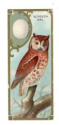 Sen Sen Chicklet Company*bird Studies*screech Owl*trade Card