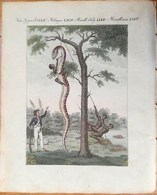 Bertuch Handcolored Print South America Boa Constrictor 1790/