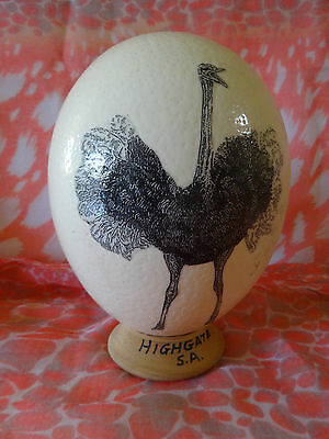 Ostrich Egg Mounted On Wooden Stand