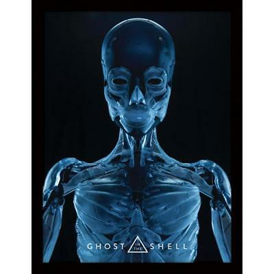 Merchandising Ghost In The Shell - Skeleton (Stampa In Cornice 30X40 Cm)