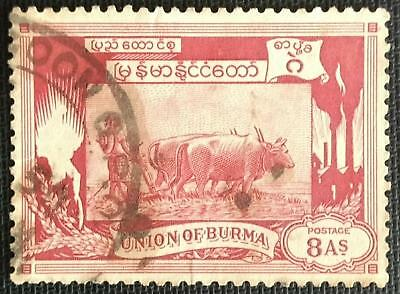 134.1 Burma (8As)  Used Stamp Agriculture, Farm Animals, Cows.