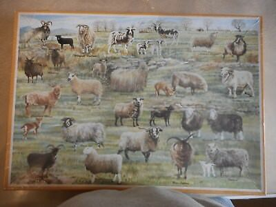 The National Trust - Rare & Local Sheep Breeds 1000 Piece Jigsaw Puzzle
