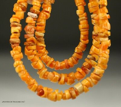 179) Good Quality Pre Columbian Chimu Moche Indian Light Orange Spondyllus Beads