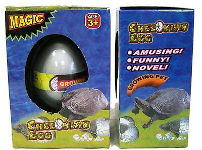 1 TURTLE WATCH THEM HATCH AND GROW EGGS novelty growing egg turtles reptiles new