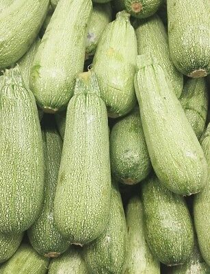 LEBANESE ZUCCHINI 15 seeds grey EASY vegetable garden zuchinni fast growing mini