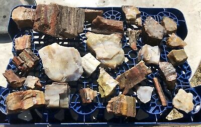 Arizona Rainbow Petrified Wood, 29 Pieces, 7.75lbs. Wholesale Price!