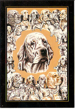 English Setter Note Card Notecards Pack of 4 by Derek Oliver