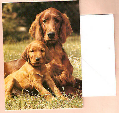 Irish Setter Mom and Pup Notecards Note Card Pack of 5