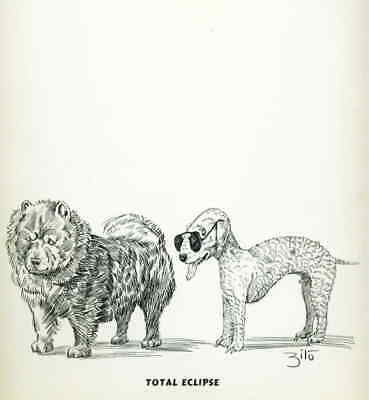 Dog Print 1935 Chow Chow Dog and Bedlington Terrier VINTAGE Funny