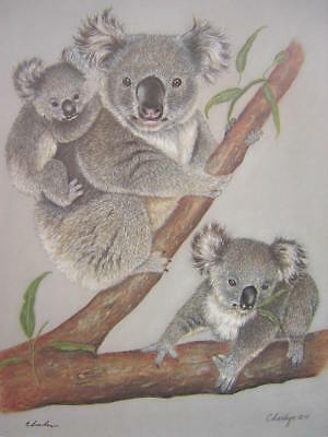 Charleyn Koala Bear Signed Limited Edition Art Print