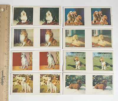 1960s 3D TRUE TO LIFE STEREO VIEWER CARDS CEREAL SANITARIUM DOG BREEDS SET OF 8!
