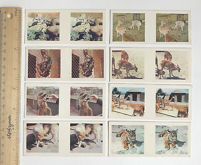 1960s 3D TRUE TO LIFE STEREO VIEWER CARDS CEREAL SANITARIUM ZOO BABIES SET OF 8!