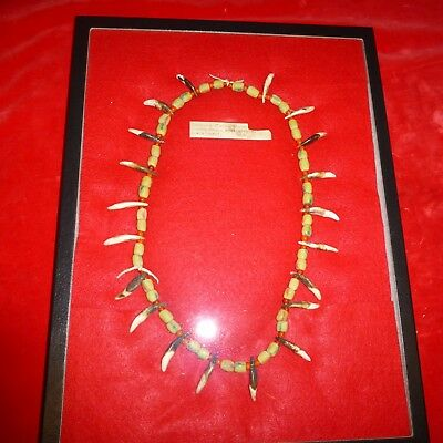 Rare Ca 1870 Native American Sioux Indian Beaded Coyote Tooth Necklace / Old Tag