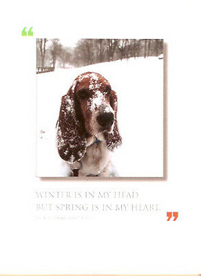Basset Hound Christmas Solstice Cards Box of 12 Made in USA