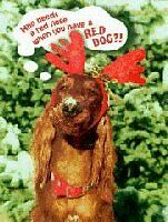 Irish Setter Christmas Cards Pack of 10 Snow Nose