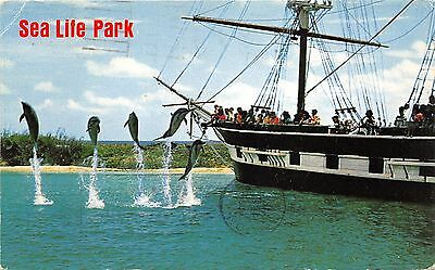 Oahu Hawaii~Sea Life Park~Dolphins Jumping by Ship~Crowd Watches~1968 Postcard