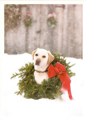 Lab Labrador Retriever Snow Dog with Wreath Christmas Cards Box of 10