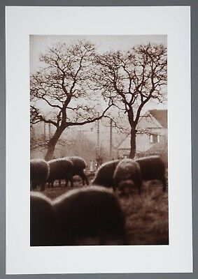 Jeanloup Sieff Limited Edition Photo Litho 34x49cm Borinage Belgium 1960 Belgien