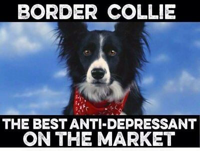 Border Collie  dog  refrigerator magnet 3 1/2 X 4 1/2 ""