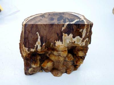 Unique Petrified Wood Stand Up Rough Rock  R76 Lapidary Oregon Cabbing Crystal
