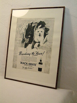Black And White Scotch Whisky Hunde Werbung Plakat Breaking The News