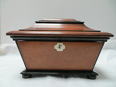 Antique Regency Wooden Tea Caddy Box Double Domed Sarcophagus c 1820s Great Item