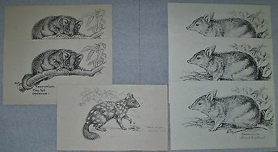 6 x VINTAGE TASMANIAN BUSH ANIMALS POSTCARDS - signed D.C.P, unused