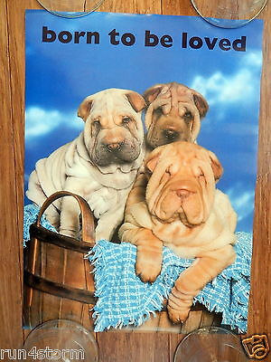 """Chinese Shar-Pei Dogs """"Born To Be Loved"""" 11 ¾"""" x 16"""" Poster"""