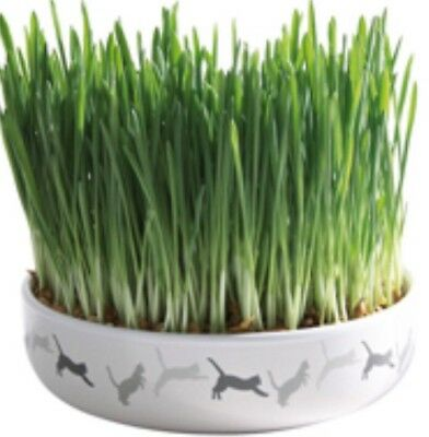 🇬🇧 Wheat Cat Grass 50g  🐱                            BUY 2️⃣ GET 1️⃣FREE