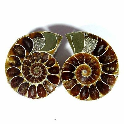 94.00Cts. Natural Ammonite Fossil Designer Match Pair Fancy Shape Gemstone
