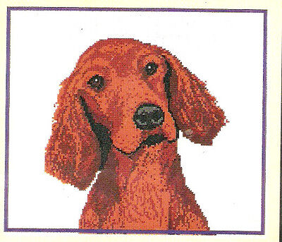 Irish Red Setter Puppy Head Study Counted Cross Stitch Complete Kit