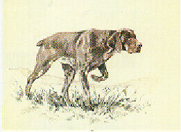 German Shorthaired Pointer Limited Edition Print by UK Artist David Thompson
