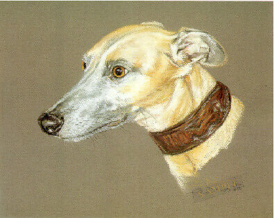 Whippet Head Study Limited Edition Art Print by UK Artist Sue Driver