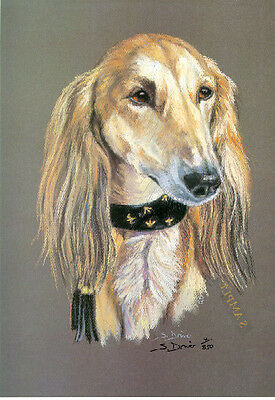 Saluki Head Study Limited Edition Art Print by UK Artist Sue Driver