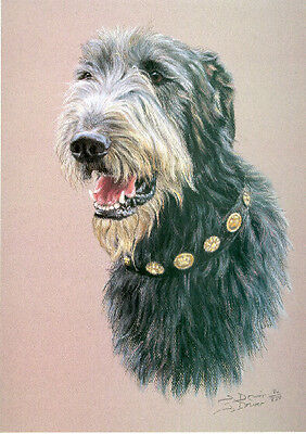 Irish Wolfhound Limited Edition Print by UK Artist Sue Driver