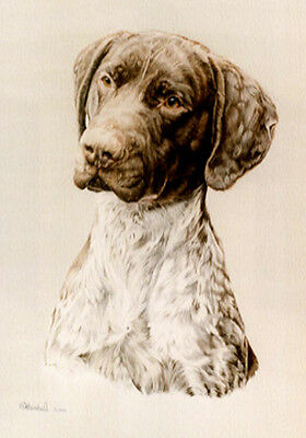 German Shorthaired Pointer Head Study Art Print by UK Artist CAH Marshall