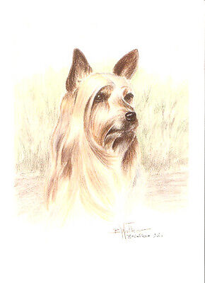 Silky Terrier Limited Edition Art Print by USA Artist Barbara Walker