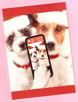 Jack Russell Terrier Santa Hats Selfie Christmas Cards Box 14