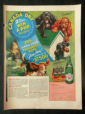 """1953 SODA Advertisement """"CANADA DRY"""" Pale Ginger Ale  CUTE LITTLE PUPPIES"""