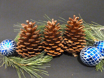 EXPRESS POST Pine Cones 14 @ 11cm + 10 @ 10cm LARGE Natural Pinecones Christmas