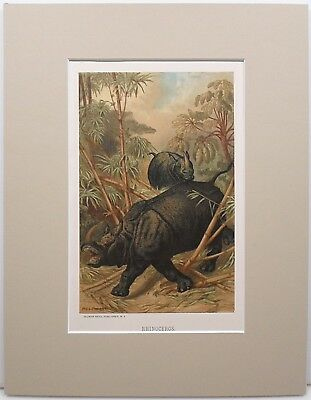 """Antique, C. 1898 Puma Colorlithograhp  - From A """"our Living World"""" Volume"""