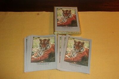 29 NEW Antioch Gummed Bookplate Labels in Open Box Bengal Tiger 1976 Photo