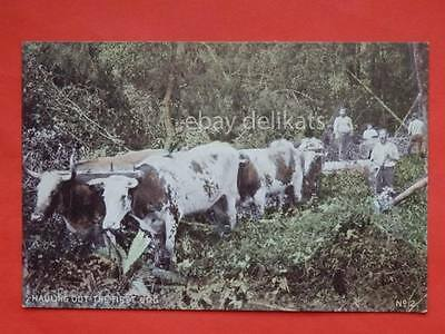 NEW ZEALAND The Birth of  Bush Settlement Hauling out the first log old postcard