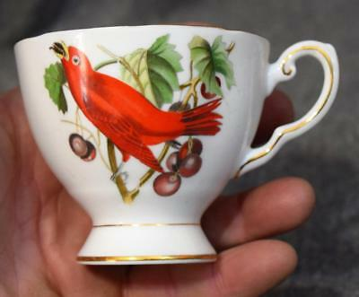 Tuscan Fine English Bone China Cup England Summer Tanager Bird MINT